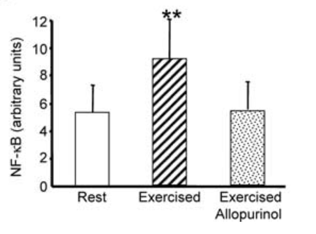 Fissac _ antioxidantes _ activación de NF-kβ