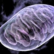 fissac _ ejercicio y salud mitocondrial
