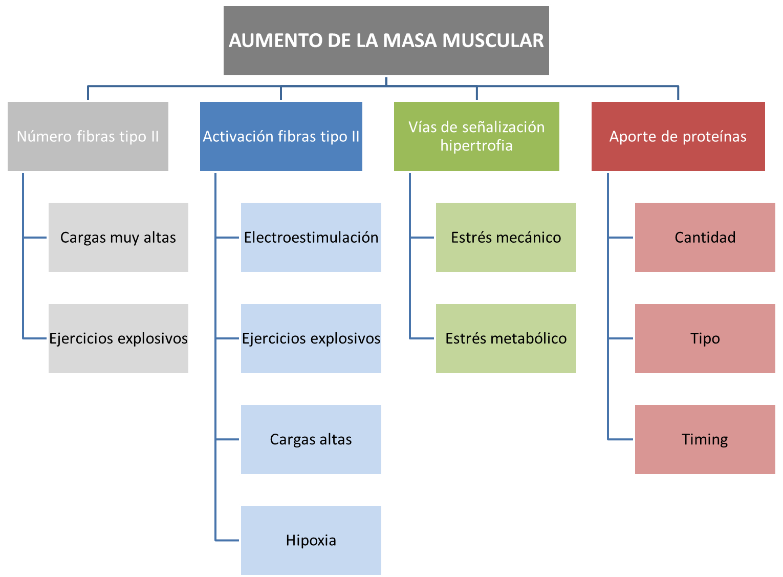 fissac _ esquema aumento de la masa muscular