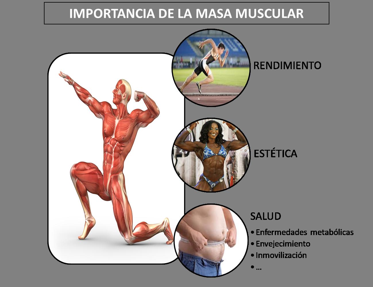 fissac _ fisiología hipertrofia