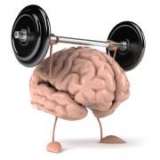 fissac _ creatina cerebro