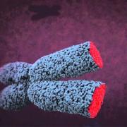 fissac _longitud telómeoros actividad física